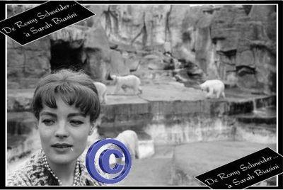 2011-01-26 - Portrait 60 Chanel