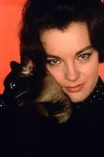 Pussycat4