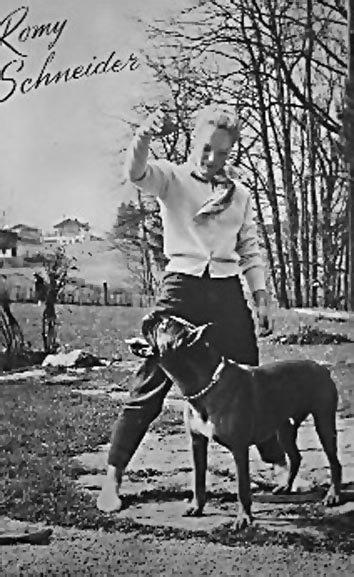 1950's - Animaux